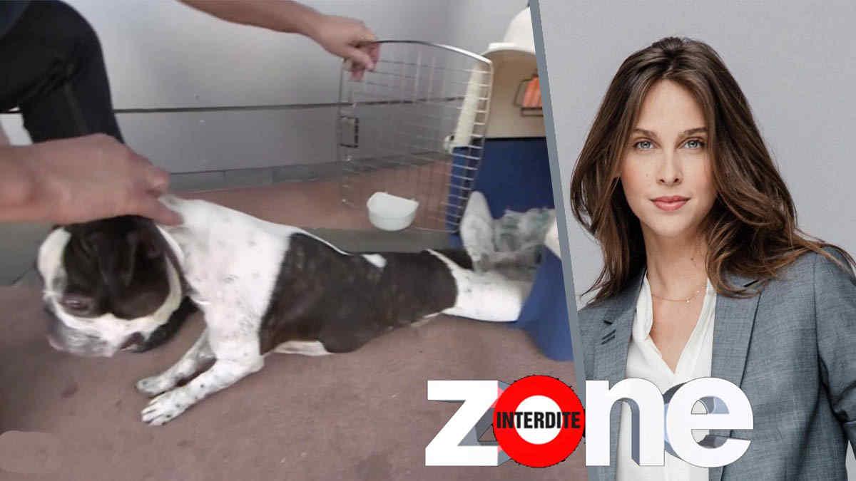 Zone interdite : une partie mettant en scène un chien scandalise les internautes.